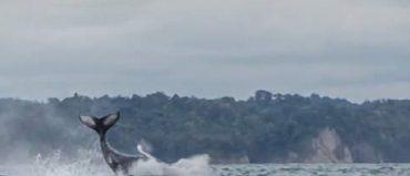 Desde Buenaventura viajan 20 mil turistas a ver ballenas