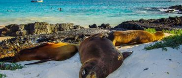 Galápagos, un destino único y asombroso