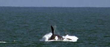 Comenzó la temporada de ballenas en Uruguay
