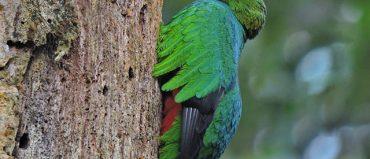 El Risaralda Bird Festival tendrá 9 rutas nuevas