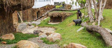 Parque Ukumarí espera crecer 40% de visitantes en 2020