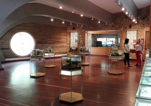 El Museo Entomológico de Comfenalco cumplió 15 años